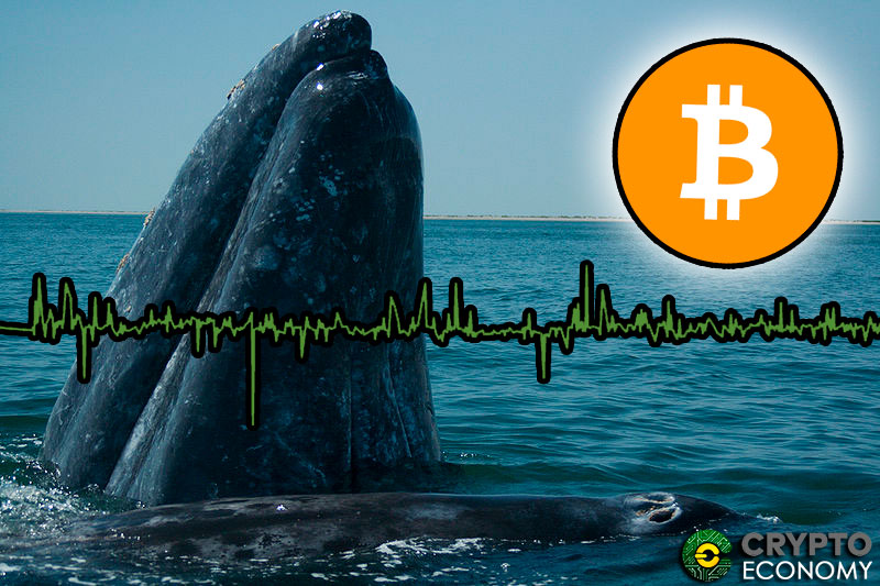 Bitcoin whales help to stabilize the market