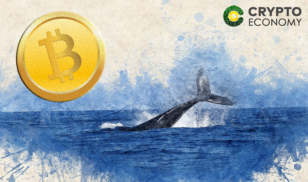 Bitcoin Whales Own One-third of All Bitcoins In Circulation