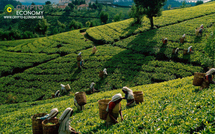 Three companies in Sri Lanka will offer insurance to farmers through a blockchain platform