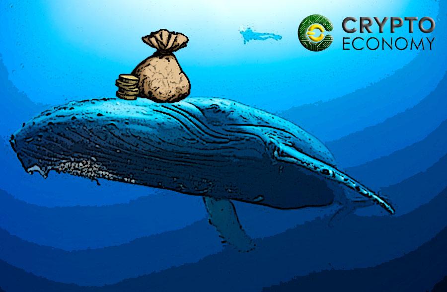 rich whales Bitcoin