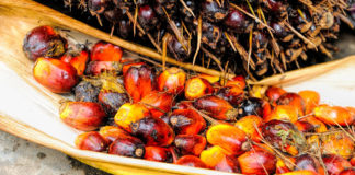 Malaysian Palm Oil Council (MPOC) and Blockchain Startup BloomBloc Develops Blockchain App to Monitor Palm Oil Supply Chain