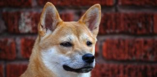 Dogecoin [DOGE] Sheds 50% Gains Evoking Bubble Fears; Cardano's Charles Hoskinson Reacts
