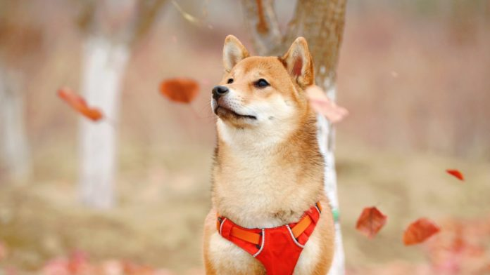 Dogecoin [DOGE] Surges By 23% While Crypto Market Bleeds